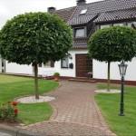 Drveće u busenu