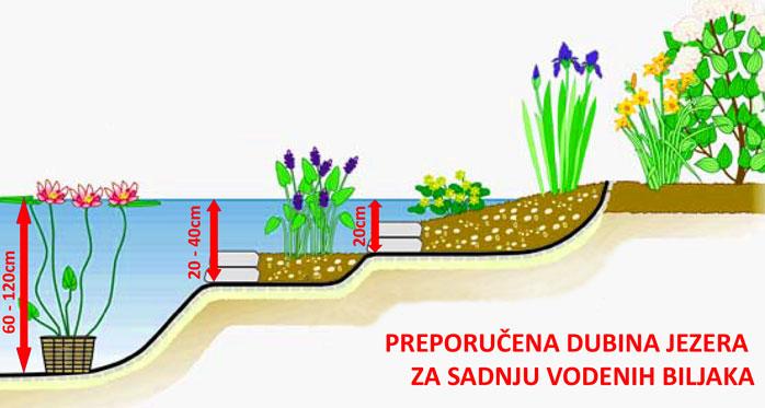dubina_jezera_za_sadnju_vodenih_biljaka