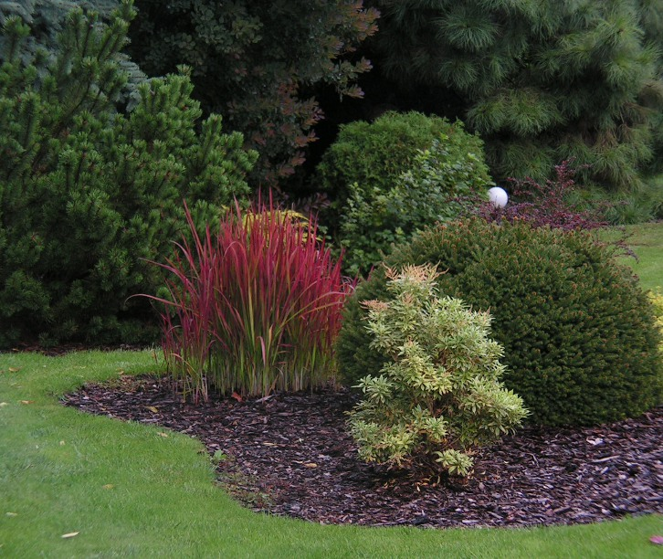 crvena trava u vrtu