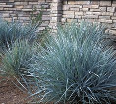 carex canyon prince2