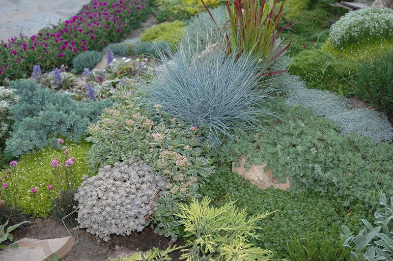 trave i perene kombinacija kamenjar