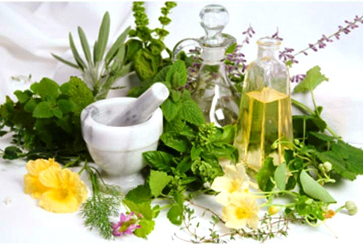 lekovito i zacinsko bilje
