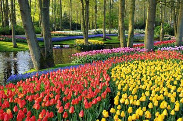 boje u vrtu