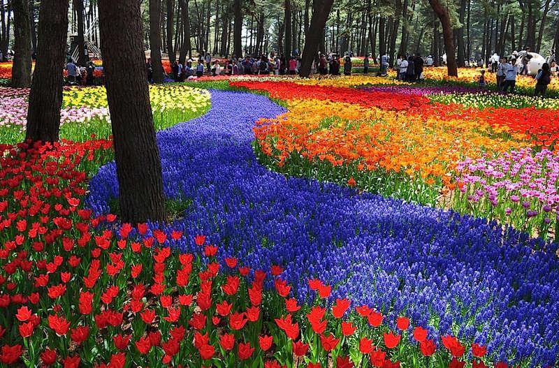 boje u vrtu 5