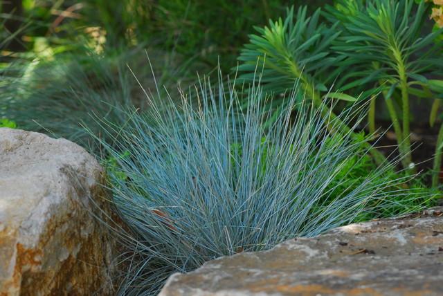 plava trava i kamen
