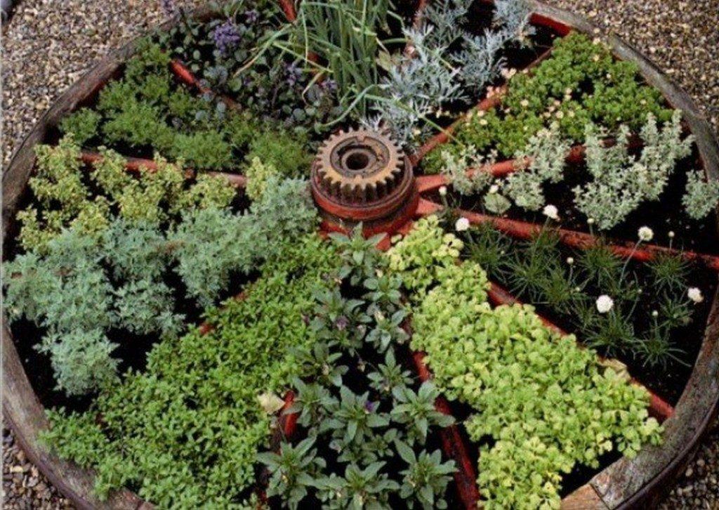 aromaticne biljke ideje3
