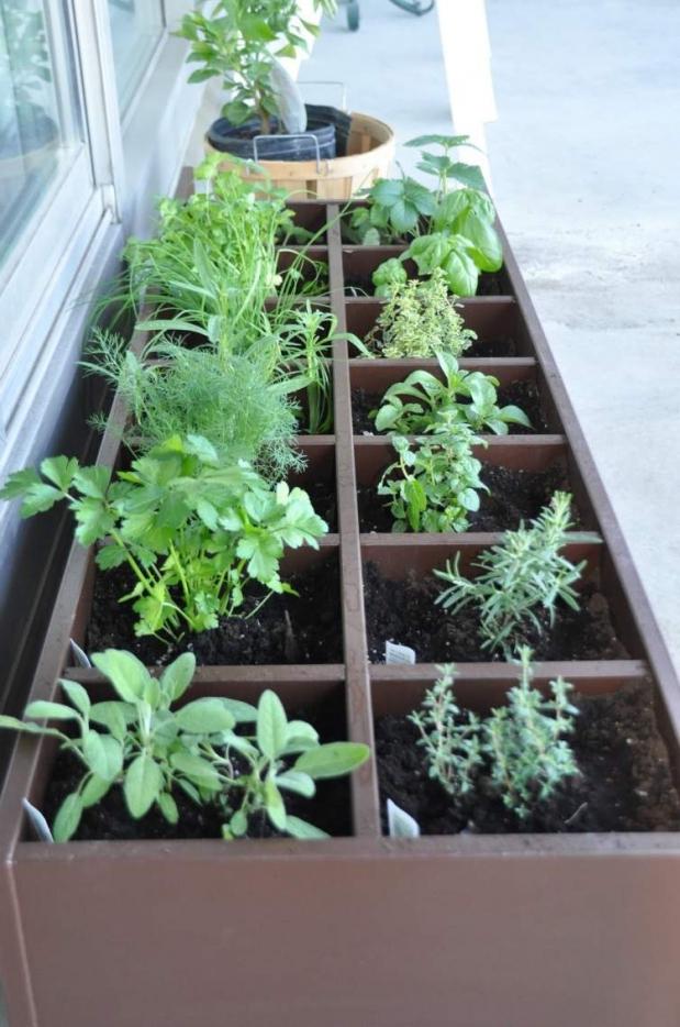 zacinsko biljke na terasi