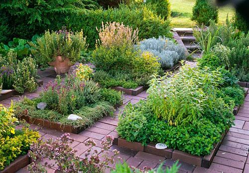 aromaticne biljke