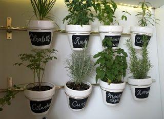 aromaticne biljke1