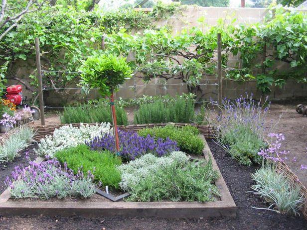 aromaticne biljke2