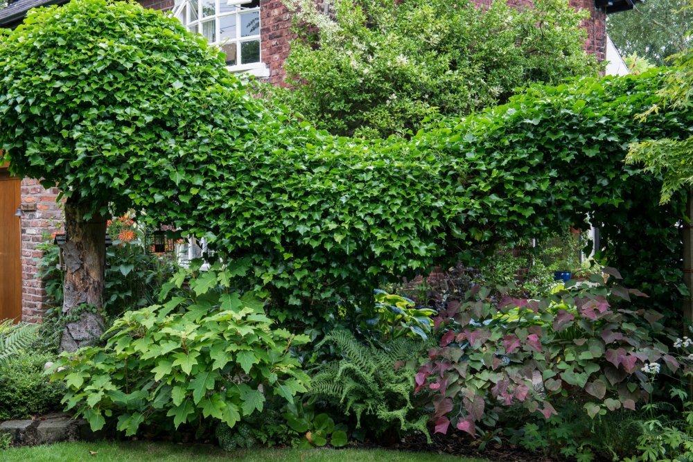 brsljani u vrtu