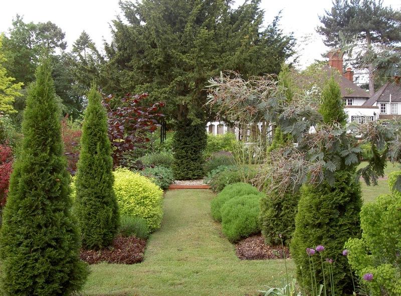 thuja-smaragd-vrt