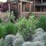 ukrasne-trave-za-vrt