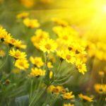miks biljaka za sunce