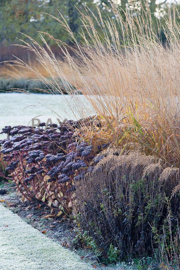 vrt tokom zime - visoki sedumi