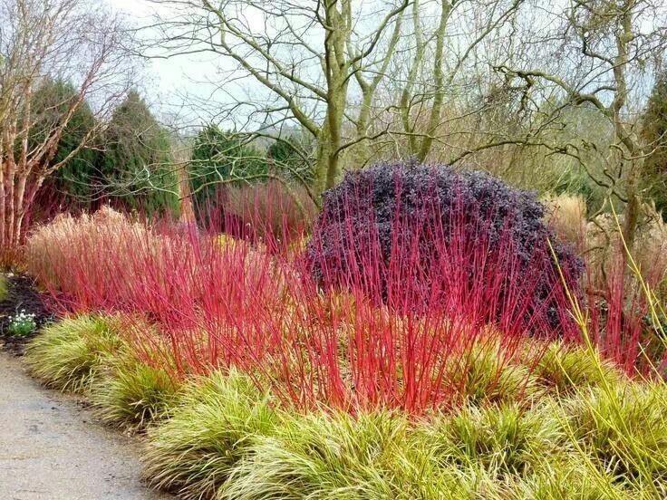 vrt tokom zime - boje