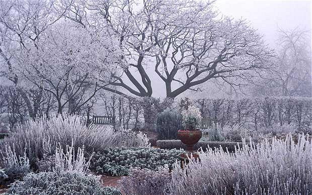 vrt tokom zime