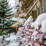 Potrebna zaštita tokom zime