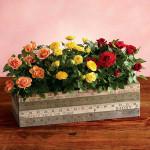 - ruže minijaturne