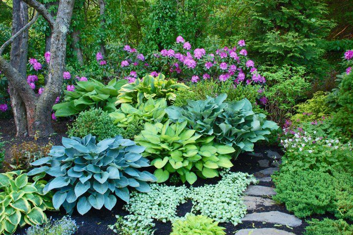 Hostas Landscaping Front Yards House